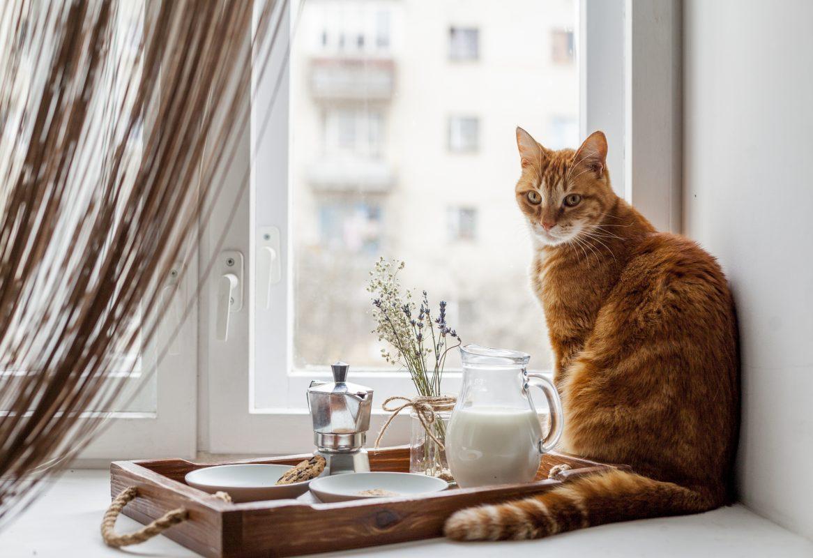 จัดบ้านให้แมวถูกใจ