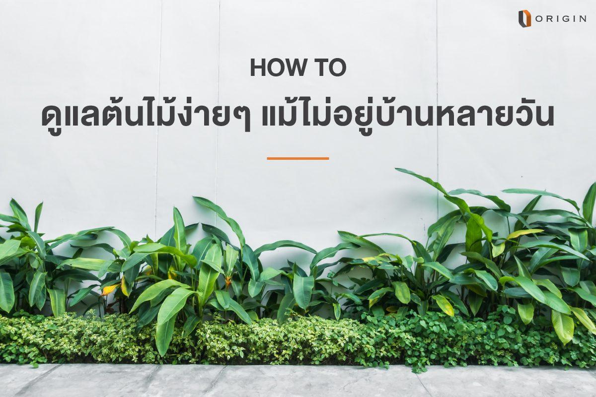 How to ดูแลต้นไม้ง่ายๆ