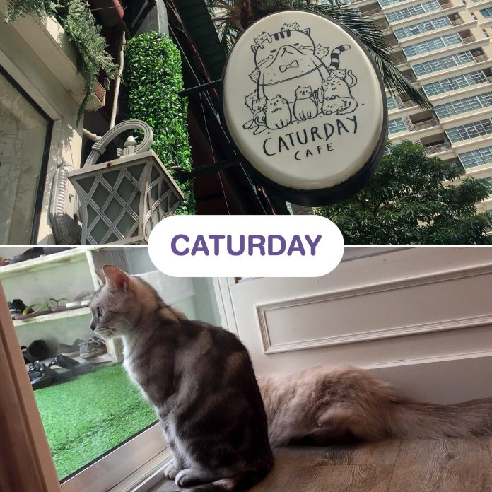 Caturday Cat Café